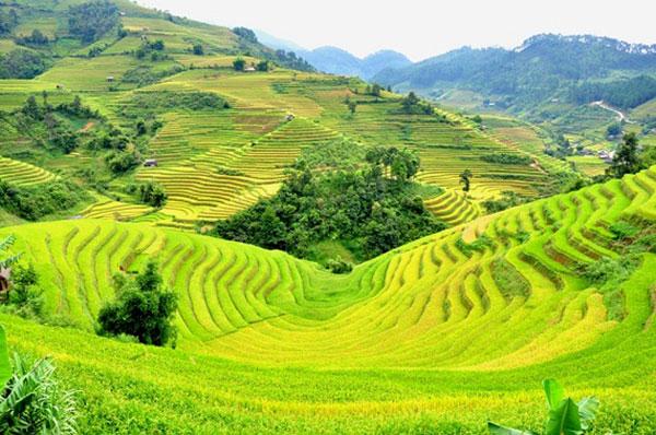 Chuyển phát nhanh từ Quảng Ninh đến Điện Biên chất lượng, giá cạnh tranh 1