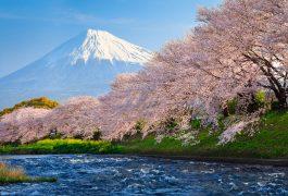 Vận chuyển hàng hóa từ Nhật Bản về Bạc Liêu không hạn chế số lượng
