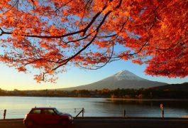 Vận chuyển hàng hóa từ Nhật Bản về Bình Định
