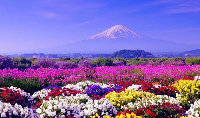 Vận chuyển hàng hóa từ Nhật Bản về Bắc Giang giá rẻ cực sốc