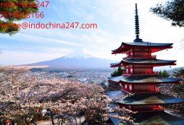 Mua hộ hàng Nhật Bản chính hãng và vận chuyển về Phú Thọ giá rẻ