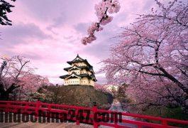 Báo giá chuyển hàng xách tay từ Nhật Bản về Thanh Hóa