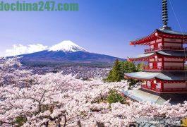 Báo giá dịch vụ chuyển hàng xách tay từ Nhật Bản về Tây Ninh