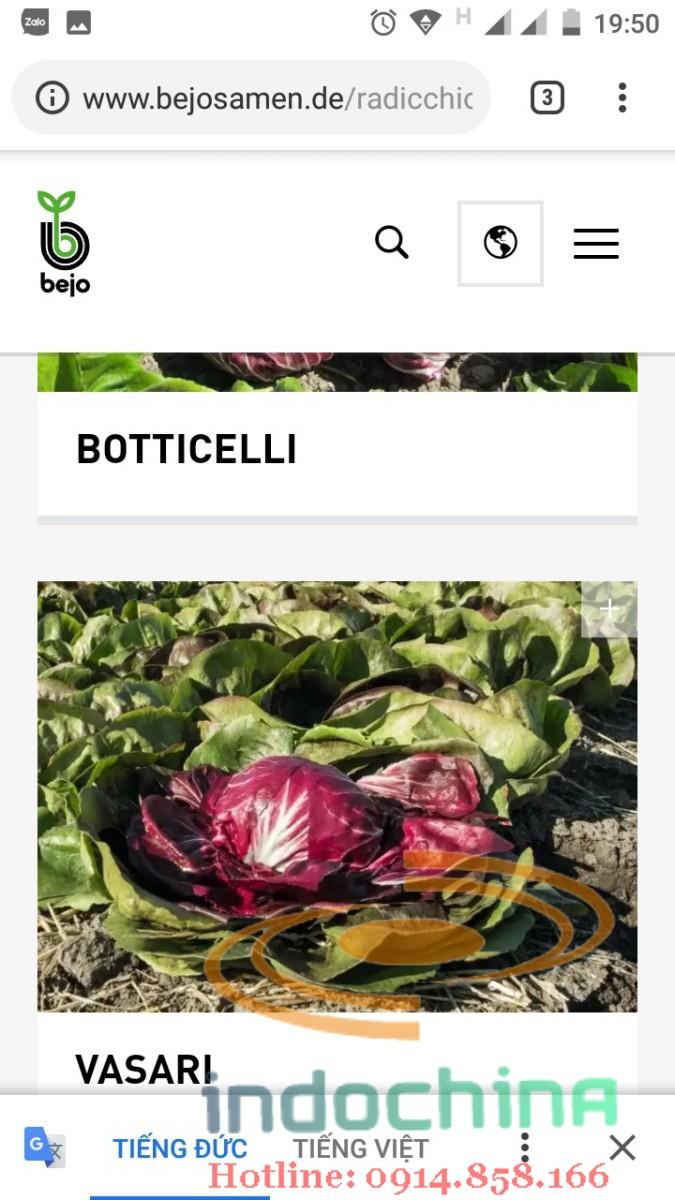 Hạt giống rau từ Đức và Pháp