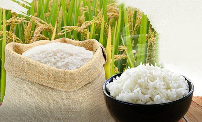 Vận chuyển đường biển LCL cho mặt hàng gạo từ Philippines về Việt Nam